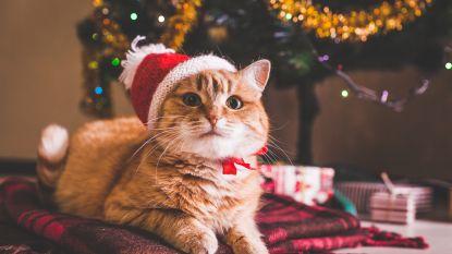 VIDEO. #FRIYAY! Eindelijk tijd voor de kerstboom, maar opgepast voor de poes!