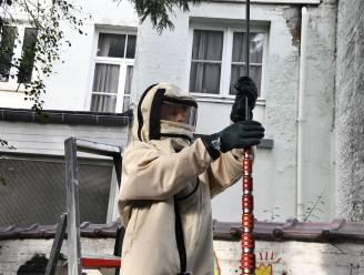 Brandweer moet nest vernietigen van Aziatische hoornaars op 15 meter hoogte