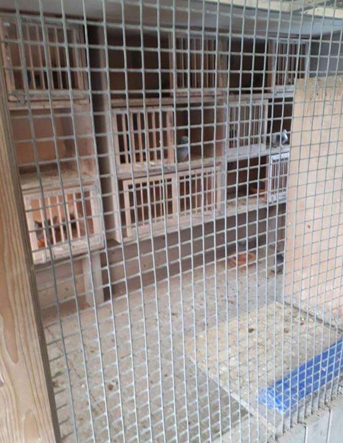 Lege kooien in Best nadat een grote groep duiven is gestolen.