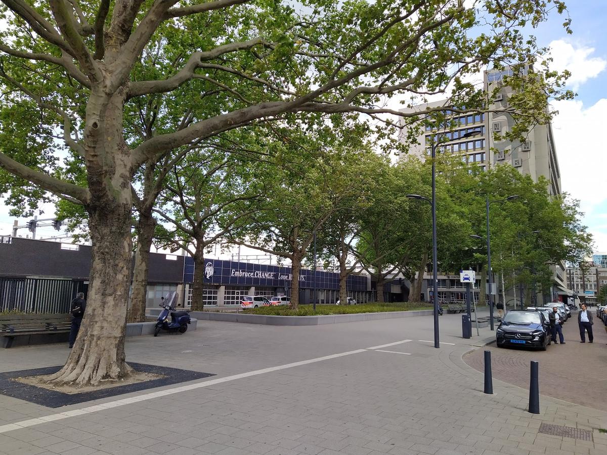 De bedreigde platanen op het Delftseplein.