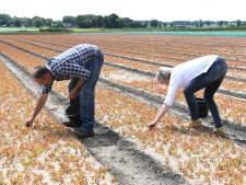 Zundertse kwekers buigen zich over zaad voor nieuwe bossen