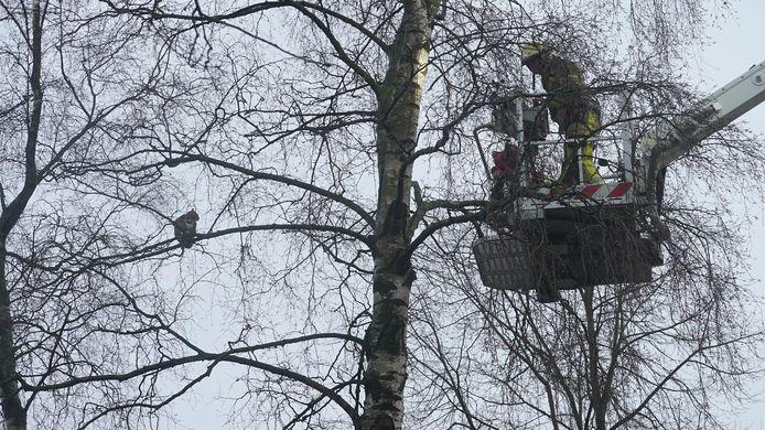 De brandweer had een halfuurtje nodig om het dier uit de boom te halen.