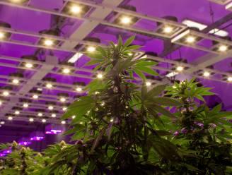 Luxemburg wil cannabis legaliseren en handel zelf organiseren. Experts verwachten domino-effect in rest van Europa