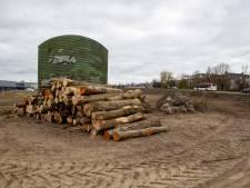 Foutje: te veel bomen gekapt voor woningbouw: 'Zo snel mogelijk terugplanten'
