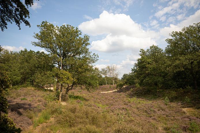 De Vuursche is rijk aan variatie, bos, hei en lanen wisselen elkaar af.