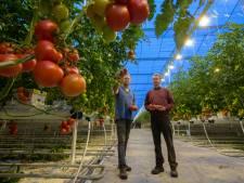 Blijven groeien of afhaken voor tomatenkweker Van den Belt in IJsselmuiden