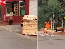 Beer springt uit afvalcontainer, jaagt voorbijgangers stuipen op het lijf
