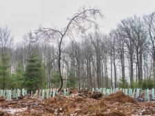450 jonge bomen aangeplant in het Liesbos
