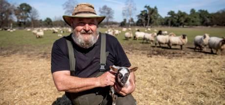 Geboortegolf en adoptieplan voor schapen op De Borkeld