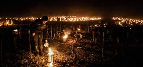 """Les vignobles français menacés par le gel: une aide """"exceptionnelle"""" promise aux viticulteurs"""