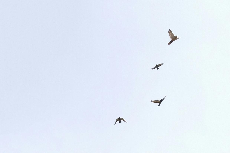 Birds Beeld Getty Images
