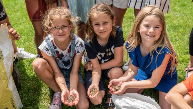 """Leerlingen Basisschool 't Vlindertje leren over Truiense akkervelden door zelf brood te bakken: """"Zodat ze liefde voor landbouw nóg beter meekrijgen"""""""