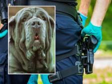 Eigenaren van doodgeschoten hond zijn aangeslagen: 'Ineens is het stil in huis'