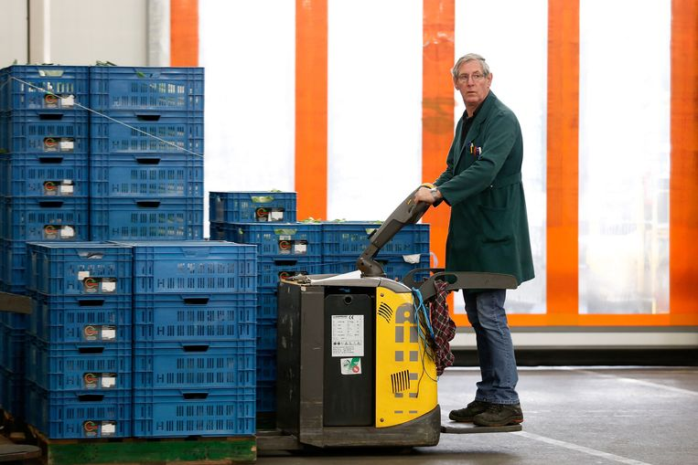 Een medewerker op de veiling in Zaltbommel verplaatst kisten. De bescheiden groei is vooral te danken aan de export. Beeld anp