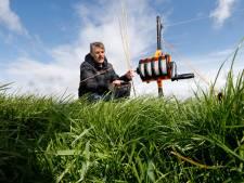 Weidevogel wint in Achterhoek aan terrein: 'Maar we zijn er nog lang niet'