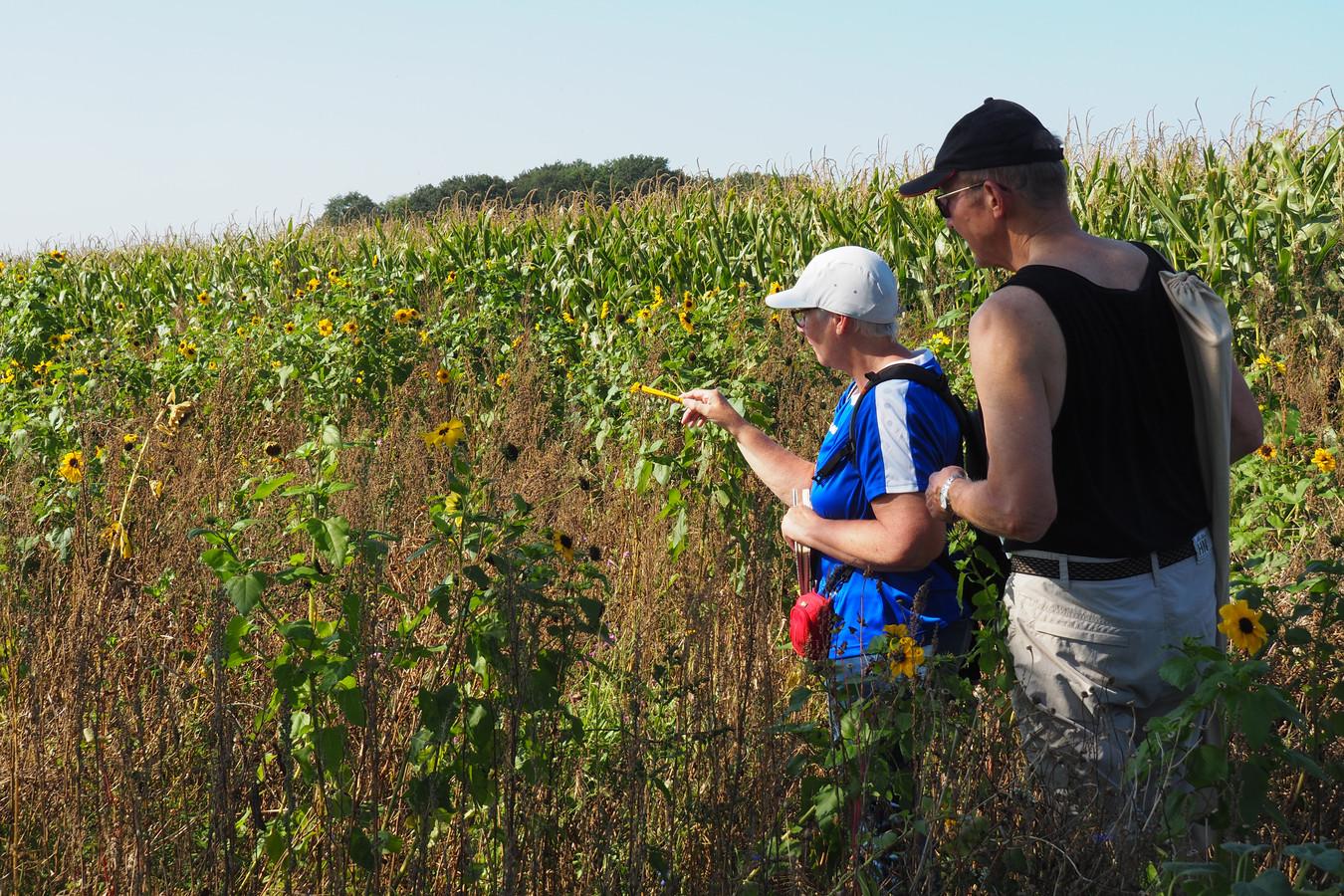 De vlindertellers van NMO liepen elke week een vaste route over de landerijen van enkele LandvanWaarde-boeren.