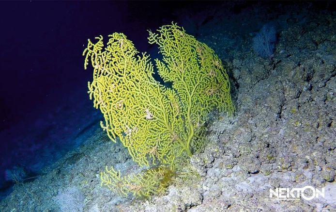 De onderzoekers ontdekten meer dan 100 nieuwe planten- en diersoorten.