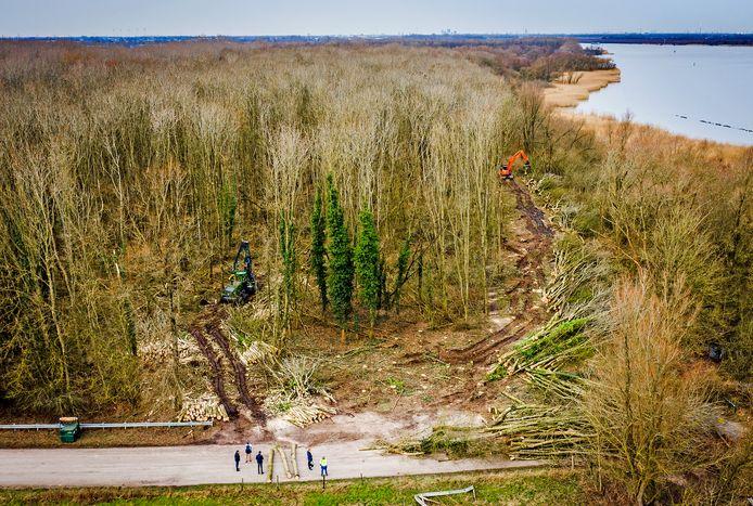 De kap van 1041 bomen in natuurgebied De Buitenzomerlanden is begonnen. De bomen maken plaats voor een nieuw windmolenpark.