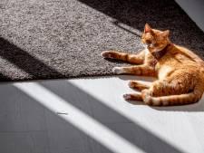 Kat zoekt boer in Zwols buitengebied