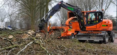GroenLinks wil per direct kap- en snoeiverbod in Oosterhout