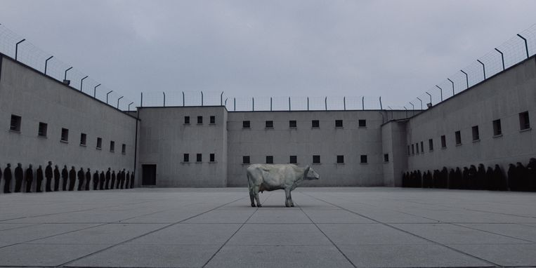 Ballad of a white cow. Beeld