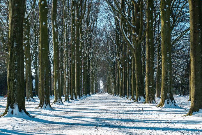 De Dreef in al haar glorie tijdens de winter.