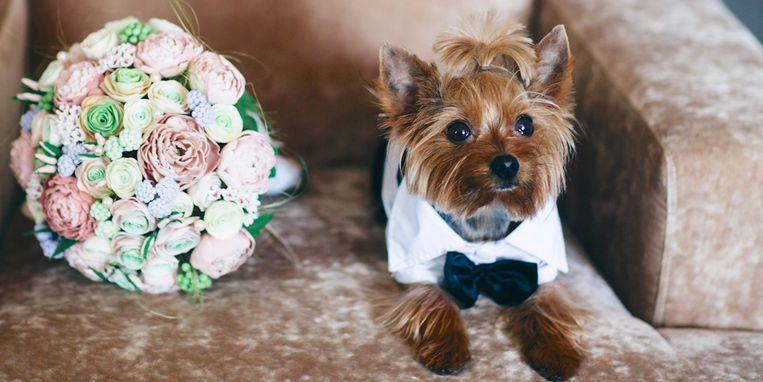 hond-bruiloft-bruidstaart-champagne-margriet.jpg