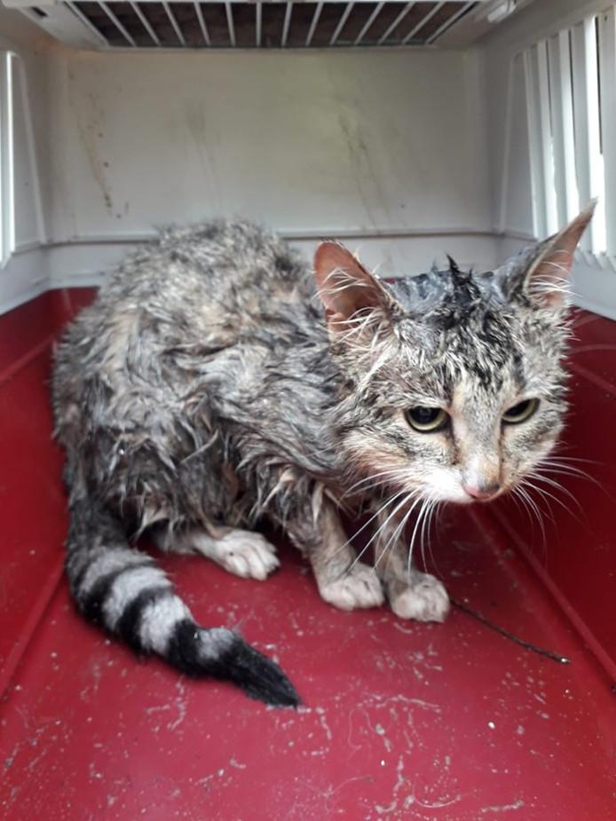 De kat werd met water en zeep uit zijn benarde positie bevrijd.