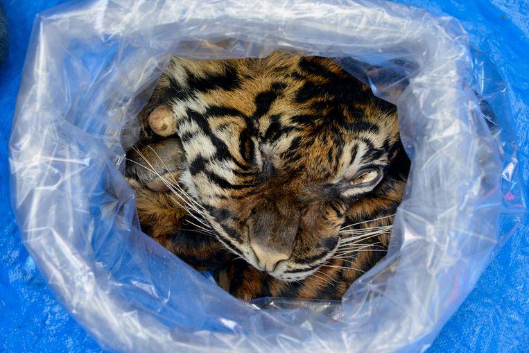 Een in Indonesië in beslag genomen vacht van een Sumatraanse tijger. Beeld Hollandse Hoogte / ANP