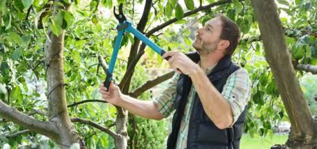 5 conseils en or pour bien tailler vos plantations