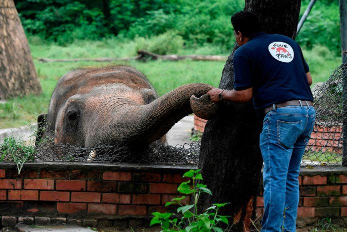 Een dierenarts onderzoekt de olifant.