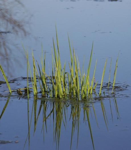 Natuuroevers voor watergang in Welzinge