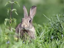 Jagers in Gelderland mogen vanaf nu deze acht dieren niet meer doodschieten
