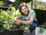 """""""Bramen groeien aan een prachtige klimplant"""". Onze tuinexperte toont welk zomerfruit je in een pot op je terras kan kweken"""