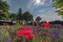 20190706 - LANGEWEG - Pix4Profs/Tonny Presser -   Open Tuinendag in gemeente Moerdijk. De tuin van familie Van der Made in Langeweg is deze dag open voor publiek