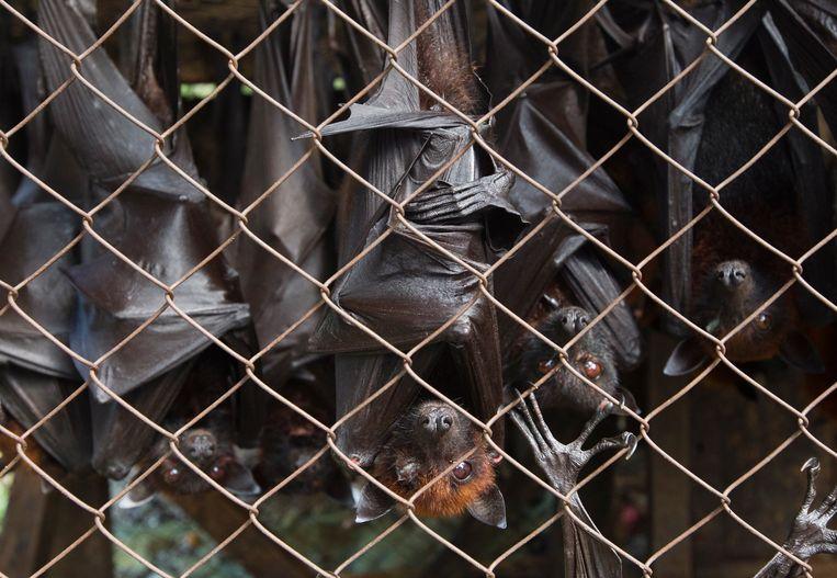 Vleermuizen in een kleine kooi. De dieren worden verkocht te worden om op te eten.   Beeld EPA/PAUL HILTON