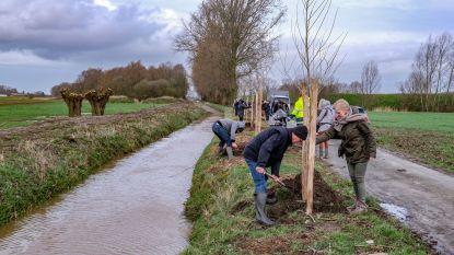 Stad Ieper stuk groener na planten van 30.500 nieuwe bomen en struiken