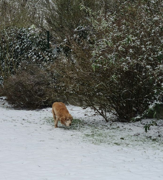Ook honden genoten van het witte landschap.