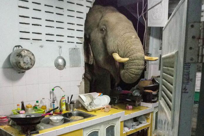 Een Thais koppel kreeg afgelopen weekend bezoek van een speciale gast. Een olifant probeerde voedsel te vinden in hun keuken.