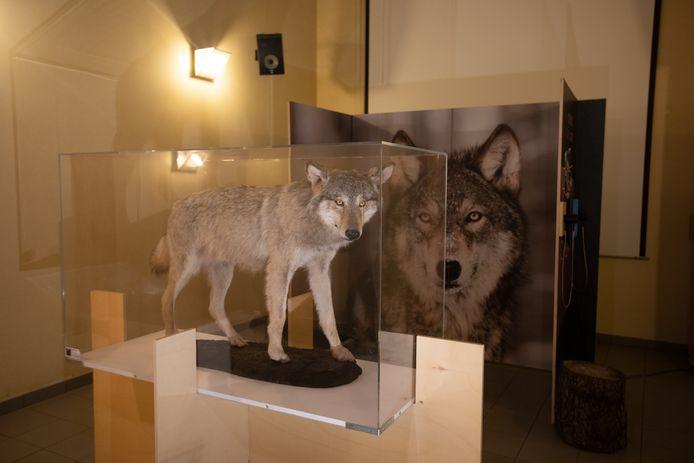 tentoonstelling wolf De watersnip in Beringen