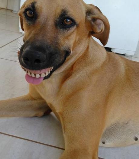 Hond kan niet stoppen met lachen na bijzondere vondst in tuin