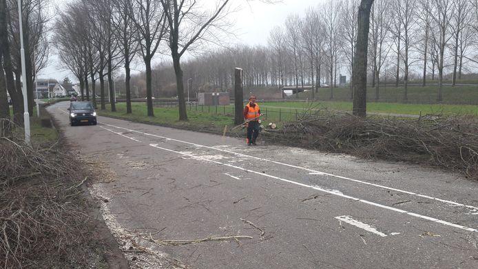 Bomen ruimen op de Wilg