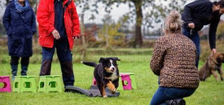 'Veiligheidsregio moet groepslessen voor hondenscholen in Gelderland weer toestaan'