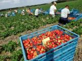 'Voldoende groente en fruit, maar aanbod wordt door coronacrisis kleiner'