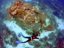 Un gigantesque corail vieux de 400 ans découvert dans la Grande Barrière