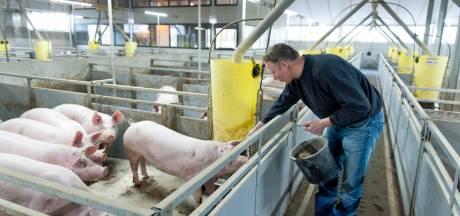 Varkensboer uit Raalte wil aan iedereen laten zien hoe zijn dieren leven: 'Zo ontstaat er acceptatie en waardering'