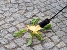 Test Achats l'affirme: les désherbants écologiques ne fonctionnent pas