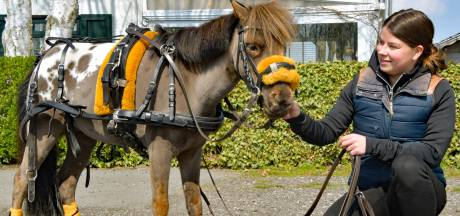 Minipaard Sparky showt accessoires van baasje Yoni uit Vogelwaarde: 'Bestellingen tot uit Australië'