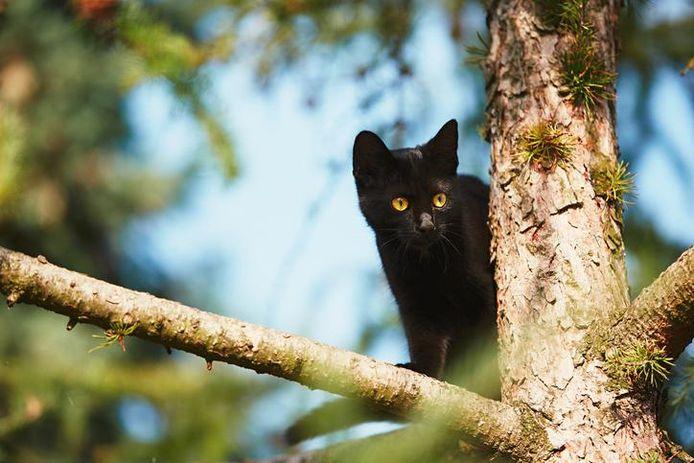 Loslopende huiskatten zijn desastreus voor de natuur. Er zou een verbod moeten komen op het laten loslopen van katten die als huisdier worden gehouden, stellen onderzoekers van Tilburg University.