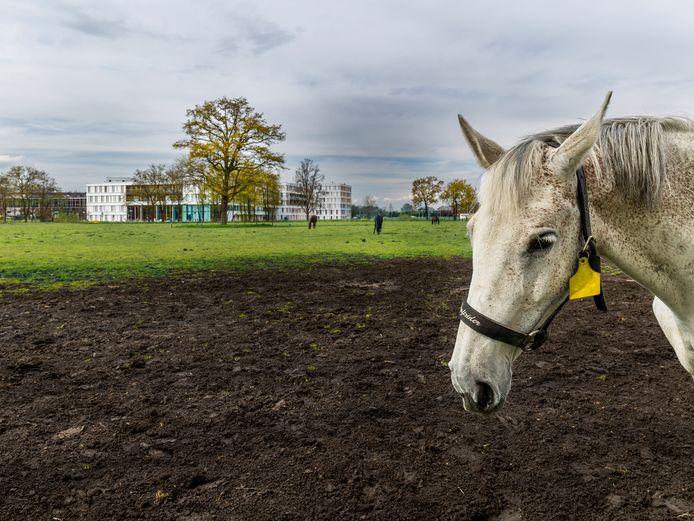 In het gebied in het Utrecht Science Park waar nu paarden grazen, wil het Ronald McDonald Huis het liefst een nieuw gebouw neerzetten. De beoogde plek ligt nét in beschermd waterlinielandschap.
